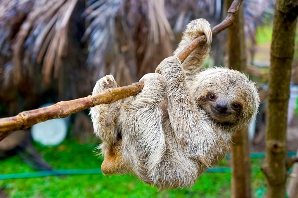 costarica-sloth-mammal-conservation-02
