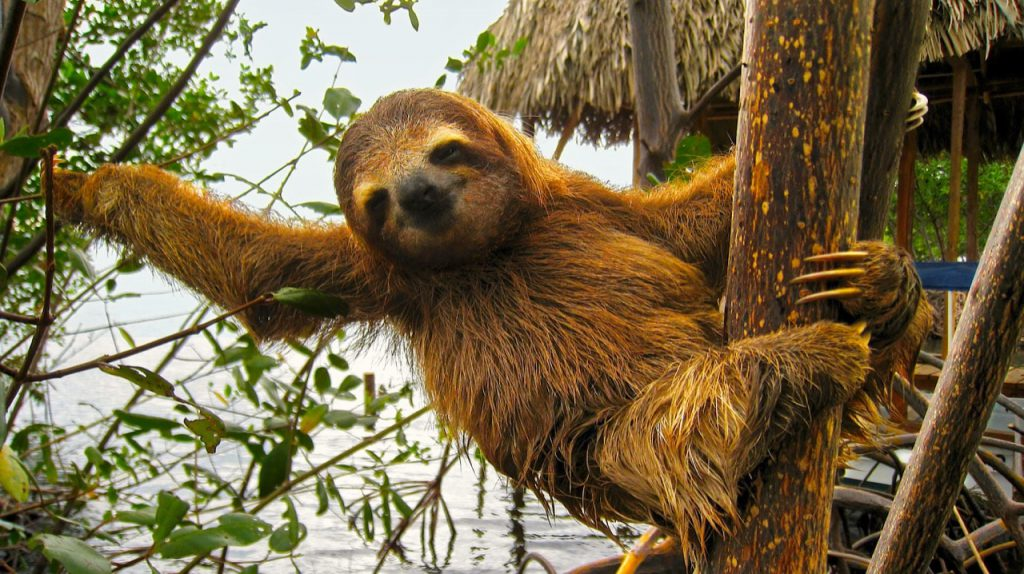costarica-sloth-mammal-conservation-03